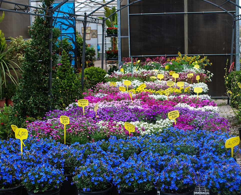 Vivai Michelini Top Garden