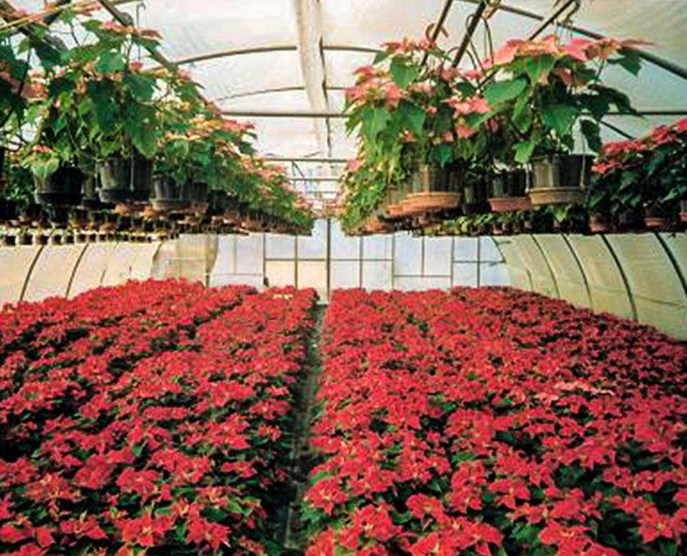 Vivai Rosso Antonio : Chi siamo since floricoltura vivai michelini