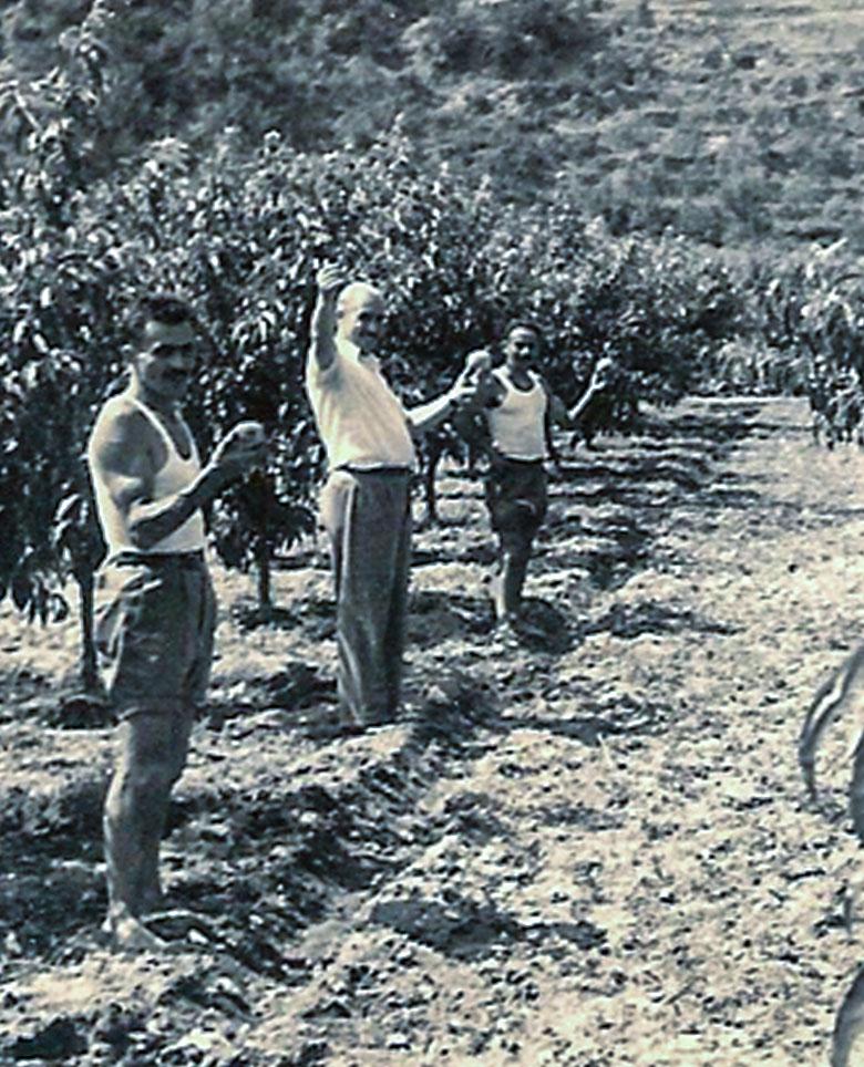 Prozio Berto, Prozio Vittorio, Prozio Lorenzo, i fratelli del nonno di Davide Michelini nel primo impianto di pesche Michelini. Fine anni '30