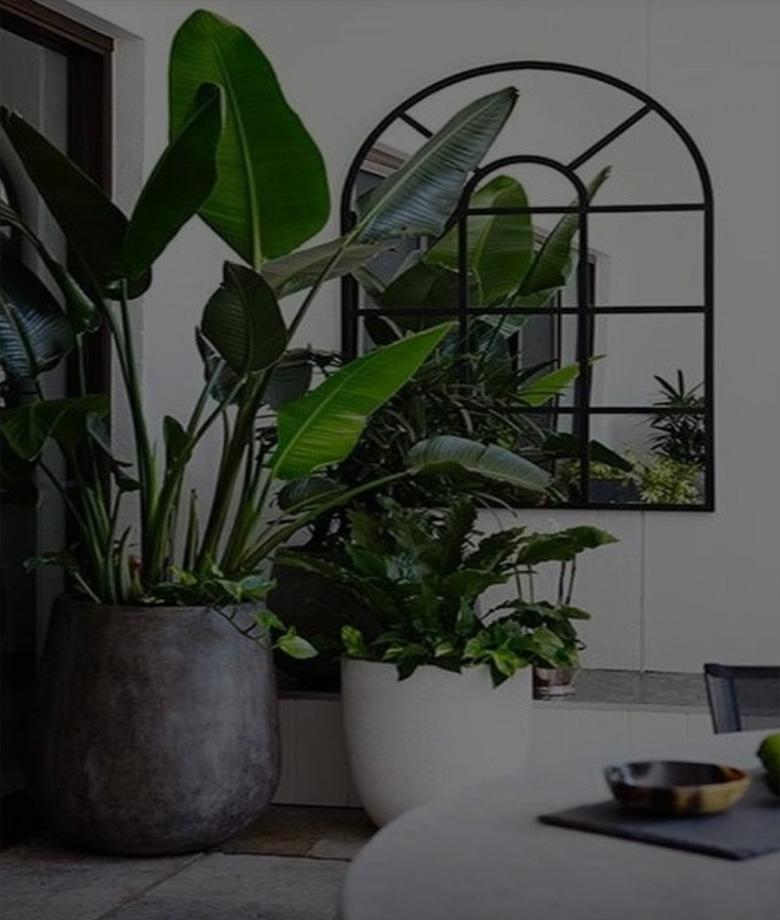 piante_da_interno_3