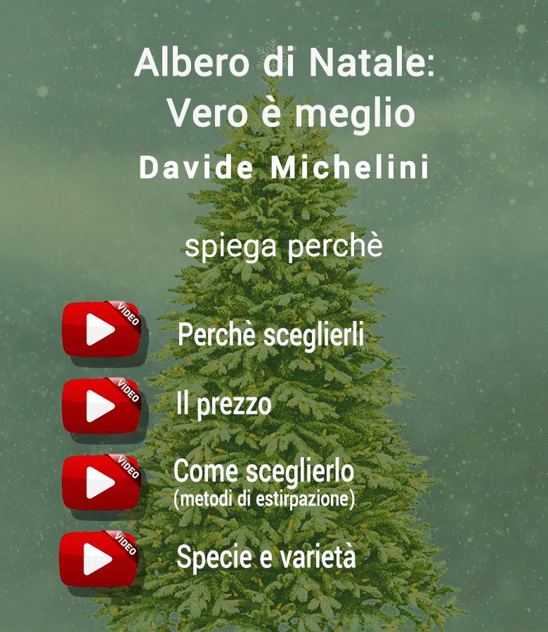 abete_di_natale_meglio_vero3_4link