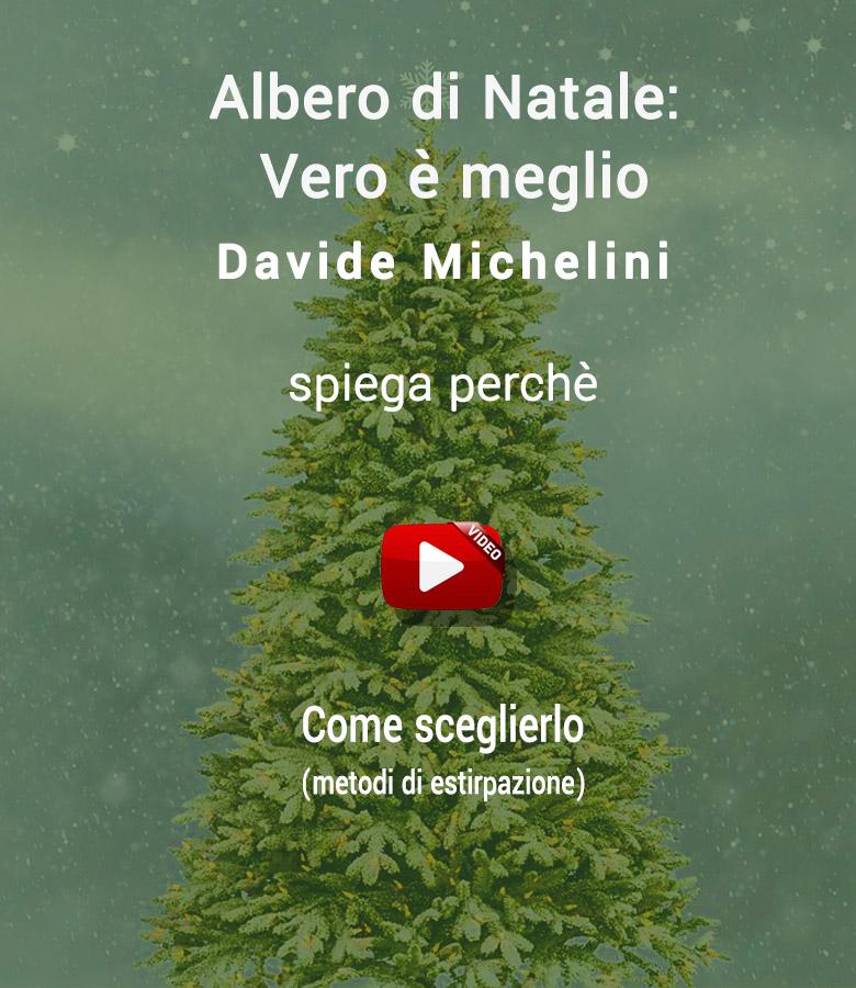 abete_di_natale_meglio_video_3