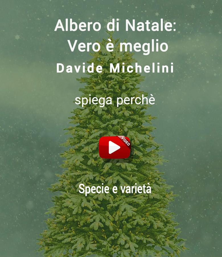 abete_di_natale_meglio_video_4